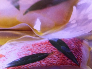 Forel Filet Sous Vide